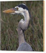 Portrait Of Great Blue Heron Wood Print