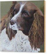 Portrait Of Jesse - Springer Spaniel Wood Print