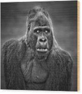 Portrait Of King Kongs Cousin IIi Wood Print