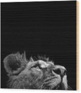 Portrait Of Lion In Black And White IIi Wood Print