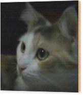 Portrait Of Miss Kitty Wood Print