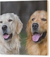 Portrait Of Two Young Beauty Dogs Wood Print