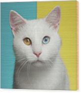Portrait Of White Cat On Blue And Yellow Background Wood Print