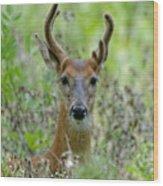 Portriat Of Male Deer Wood Print