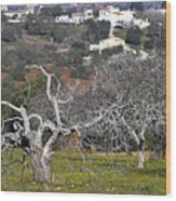Portuguese Almond Plantation Wood Print