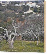Portuguese Almond Plantation Wood Print