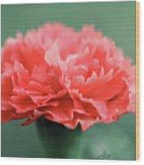 Posh Carnation Wood Print