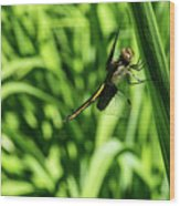 Posing Dragonfly 2 Wood Print