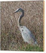Posing Heron Wood Print