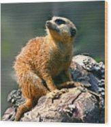Posing Meerkat Wood Print