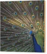 Posing Peacock Wood Print