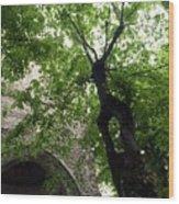 Positano Arch Wood Print