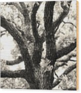 Post Oak Wood Print
