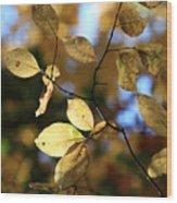 Pot Of Gold II Wood Print