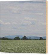 Potato Blossoms In Corinna Maine Wood Print