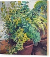 Potted Herbs Wood Print