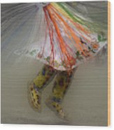 Pow Wow Shawl Dancer 4 Wood Print