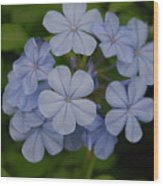 Powder Blue Flowers Wood Print