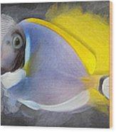 Powder Blue Tang No 01 Wood Print