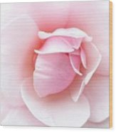 Powder Puff Rose Wood Print