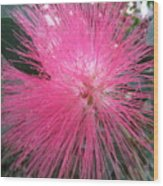 Powder Puff Tree Wood Print