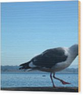 pr 117 - A  Seagull On Thr Fence Wood Print