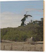 pr 180 - The Leaning Tree Wood Print