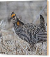 Prairie Chicken Ll Wood Print