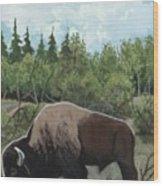 Prairie Bison Wood Print