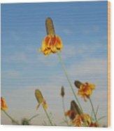 Prairie Cone Flowers Against Blue Sky Horizontal Number Three Wood Print