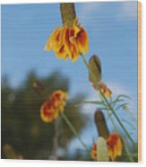 Prairie Cone Flowers Against Blue Sky Vertical Number One Wood Print