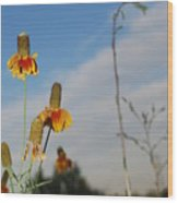 Prairie Cone Flowers Against Blue Sky Vertical Number Two Wood Print