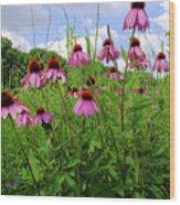 Prairie Coneflowers Wood Print