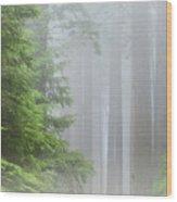 Prairie Creek State Park Wood Print