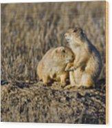 Prairie Dog Couple Wood Print