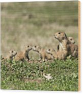 Prairie Dog Family 7270 Wood Print