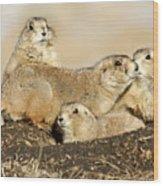Prairie Dog Family Portrait Wood Print