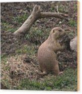 Prairie Dog Wood Print
