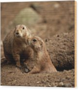 Prairie Dogs Wood Print