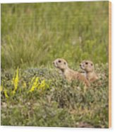 Prairie Dogs On Lookout Wood Print