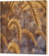 Prairie Grass Detail Wood Print