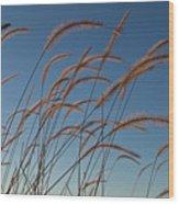 Prairie Grass Landscape Wood Print
