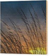 Prairie Grass Sunset Patterns Wood Print