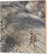 Prairie Lizard _ 1a Wood Print