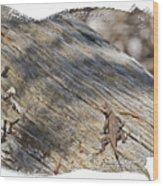 Prairie Lizard _ 1b Wood Print