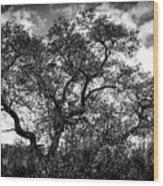 Prairie Oak Wood Print