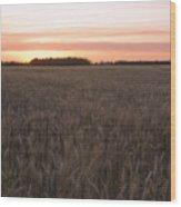 Prairie Pink Wood Print