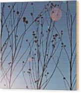 Prairie Plants Wood Print