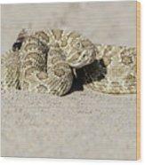 Prairie Rattlesnake  Wood Print