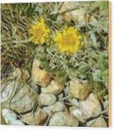 Prairie Rock Garden Wood Print